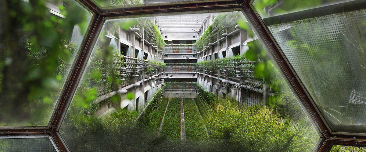 Is vertical farming the future?
